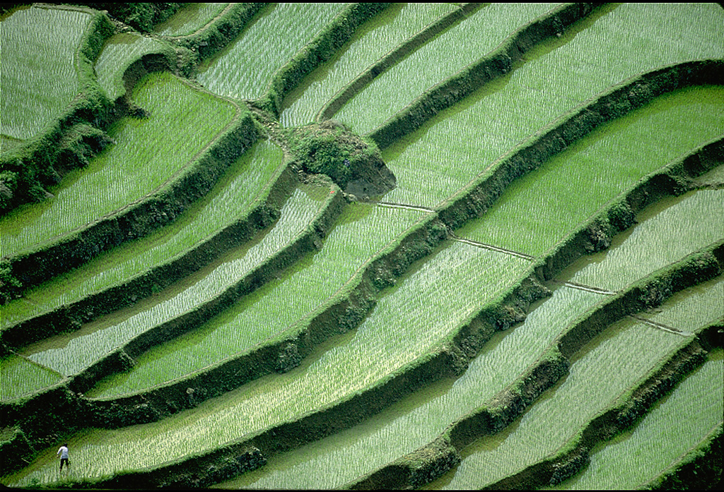 Rice paddies in Sichuan, China