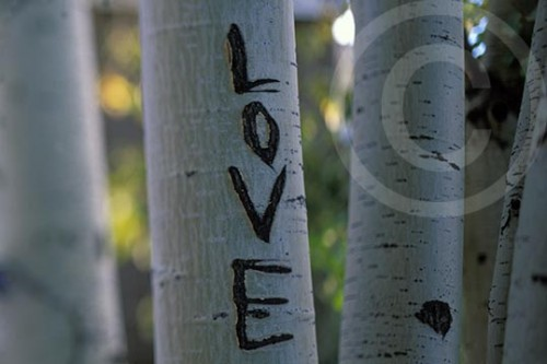 Photo of an Aspen tree carved with LOVE
