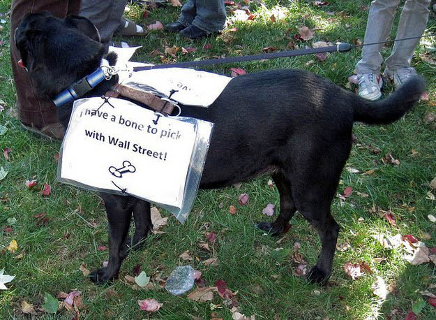 Photo of Dogs of Wall Street