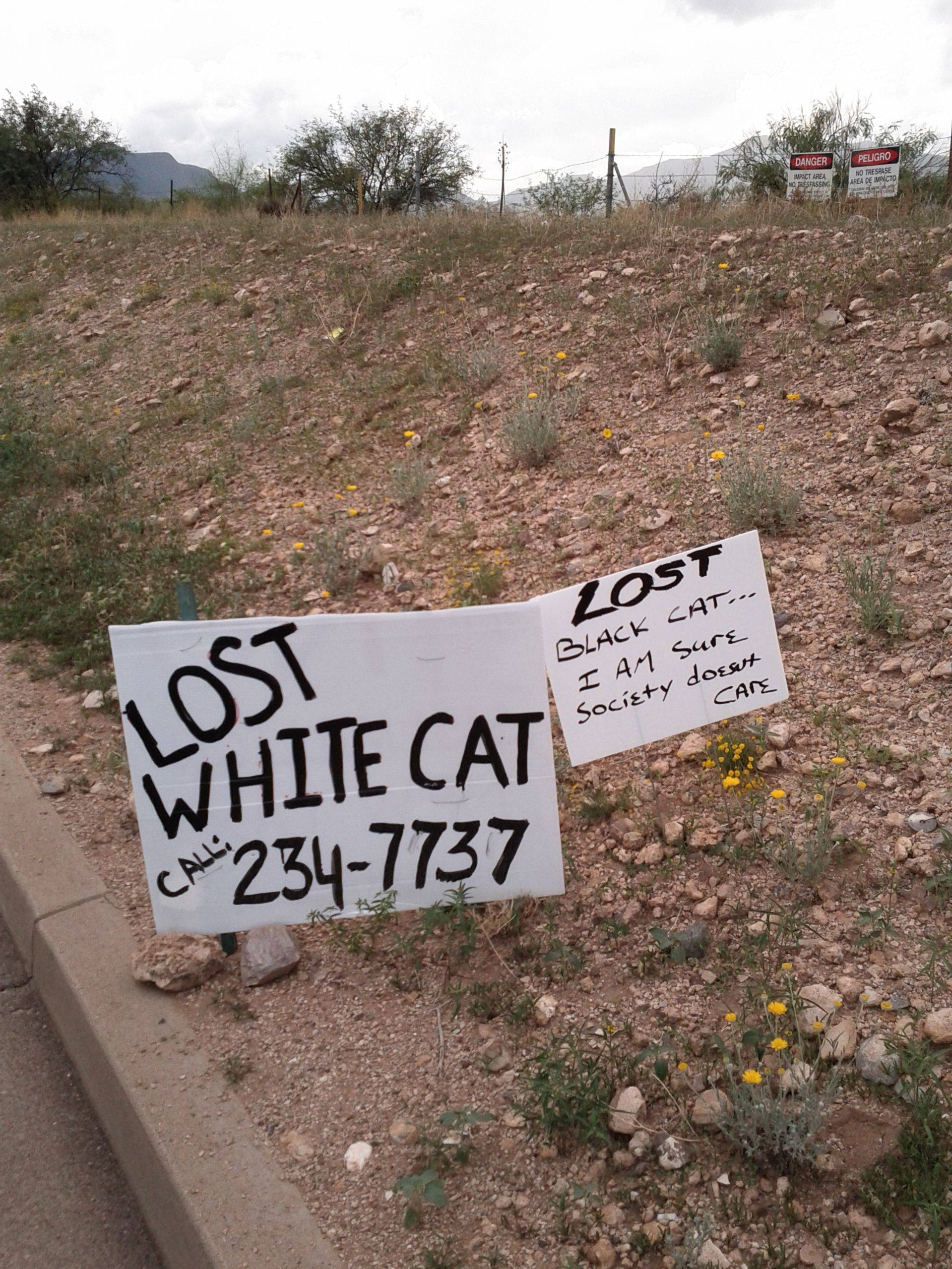 Photo of lost cats signs